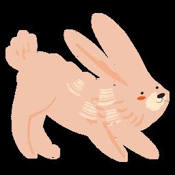 Conejo apoyado plano