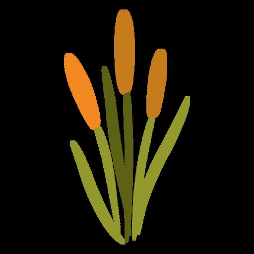 Long flower garden plant