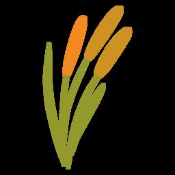 Flat orange garden plant