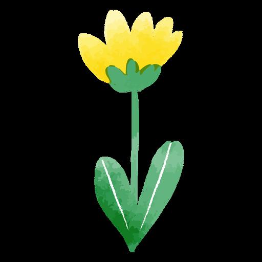 Acuarela de tulipán lindo
