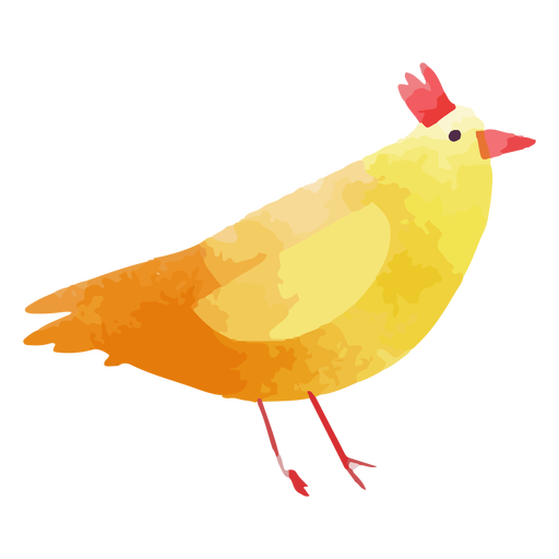 Farm chicken watercolor