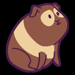 Cute guinea pig hairy