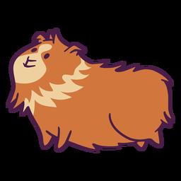 Hairy guinea pig flat