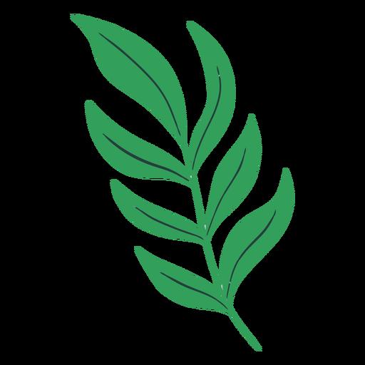 Flat green leaves