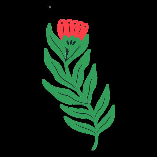 Long stem red tulip