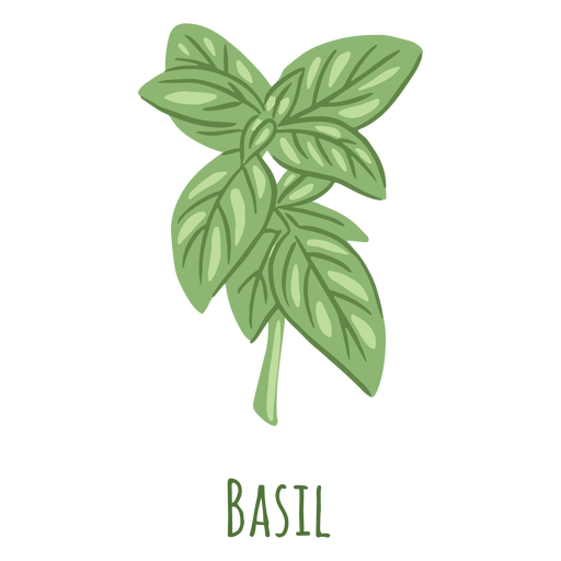 Basil herb flat