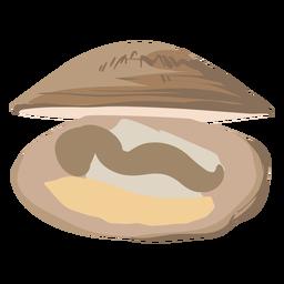 Clam food illustration