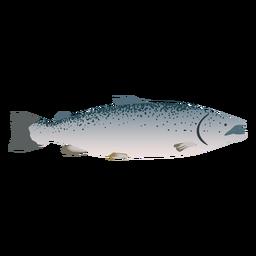 Fish sea illustration