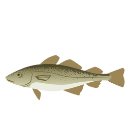 Swimming fish illustration