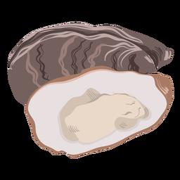 Seashell sea illustration