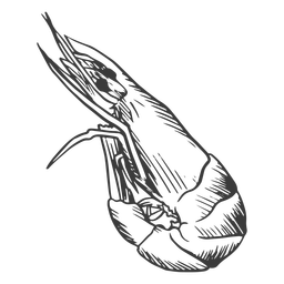 Mariscos dibujados a mano - 5