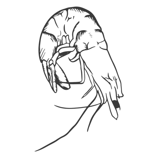 Mariscos dibujados a mano - 11