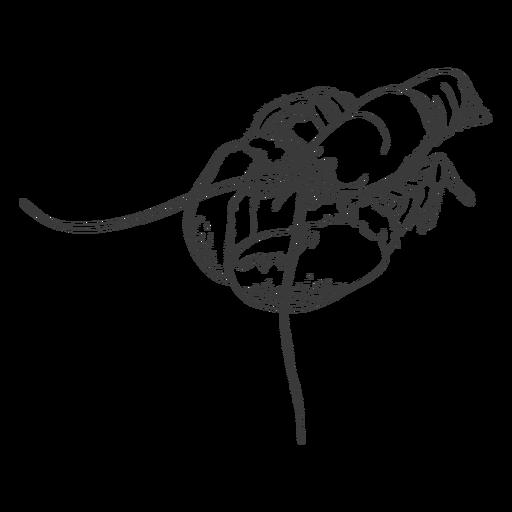 Mariscos dibujados a mano - 13