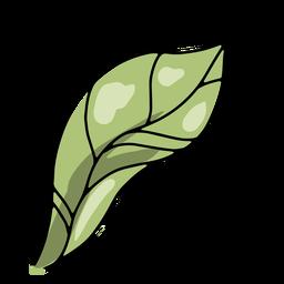 Leaf nature illustration