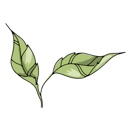 Connected leaves illustration