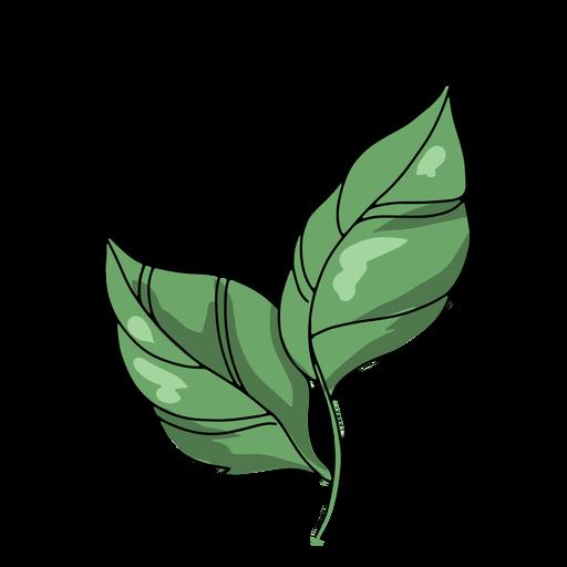 Two leaves illustration