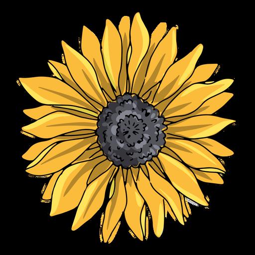 Single sunflower illustration