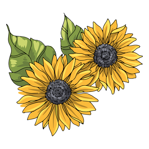 Two sunflowers illustration