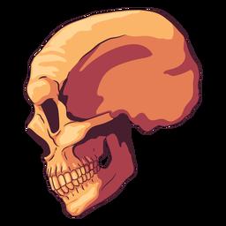 Ilustración de cráneo de vista lateral