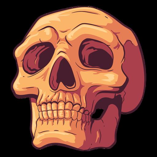 Looking up skull illustration