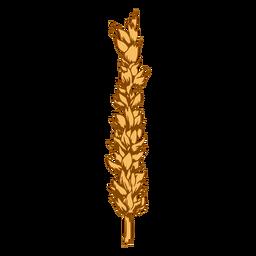 Wheat spike grain