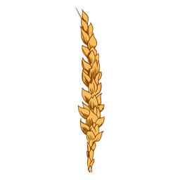 Wheat cereal illustration
