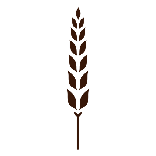 Split wheat spike cut-out Transparent PNG