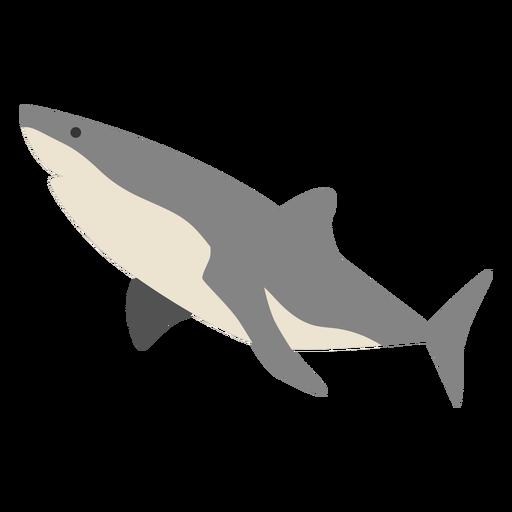 Shark sea animal swimming