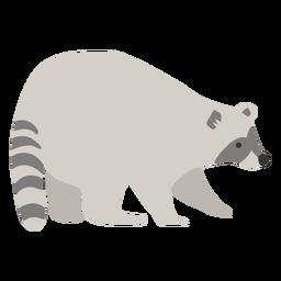 Raccoon animal cute
