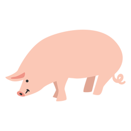 Pig farm animal cute