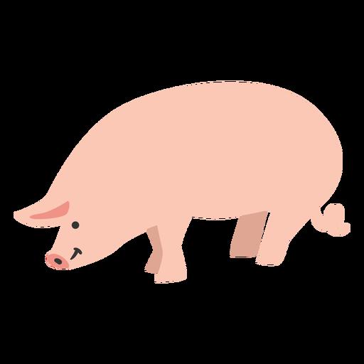 Pig farm animal cute