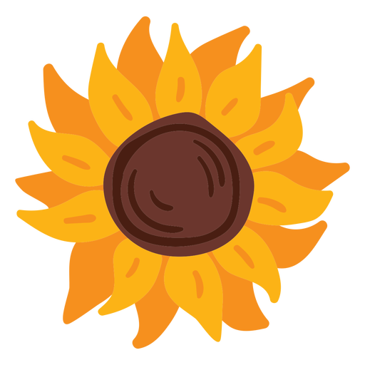 Sunflower bloom flat Transparent PNG