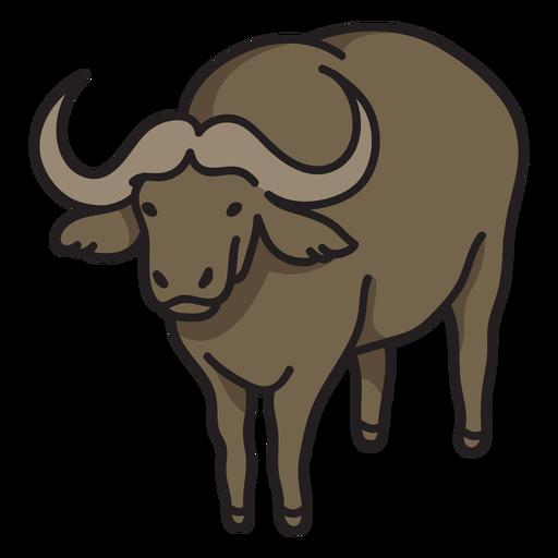 Semi flat wild african buffalo