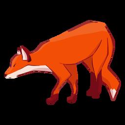 Fox predator animal