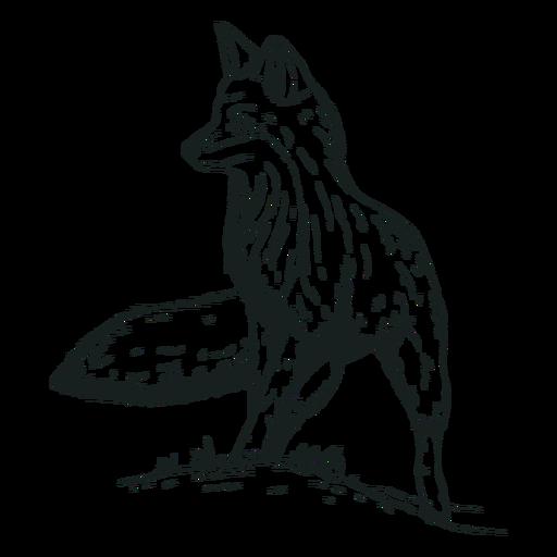 Dibujado a mano animal zorro