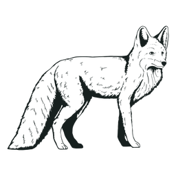 Cute fox animal hand-drawn