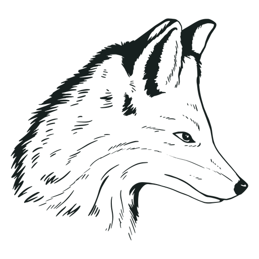 Fox head hand-drawn