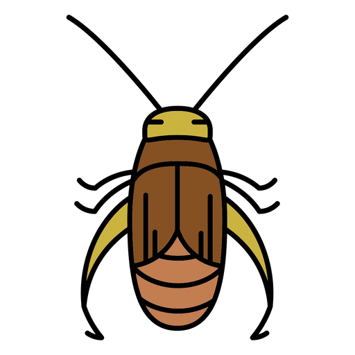 Simple stroke cricket insect