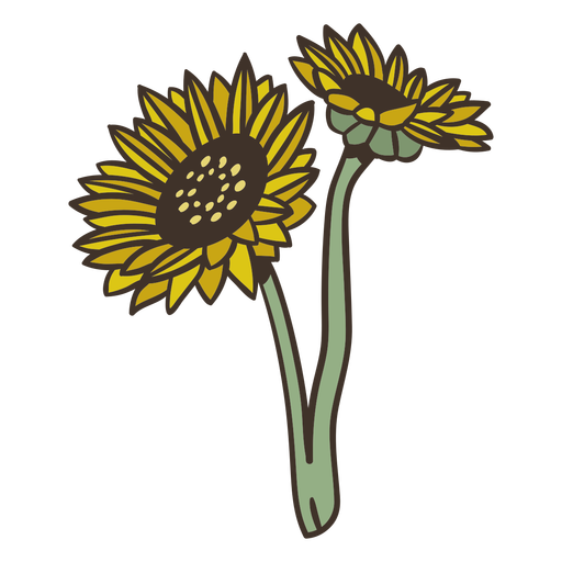 Semi flat sunflowers