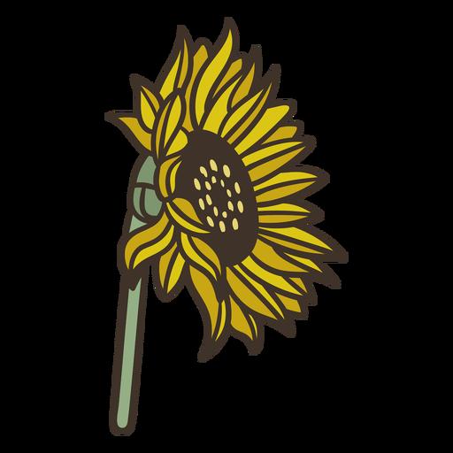 Semi sideways flat sunflower