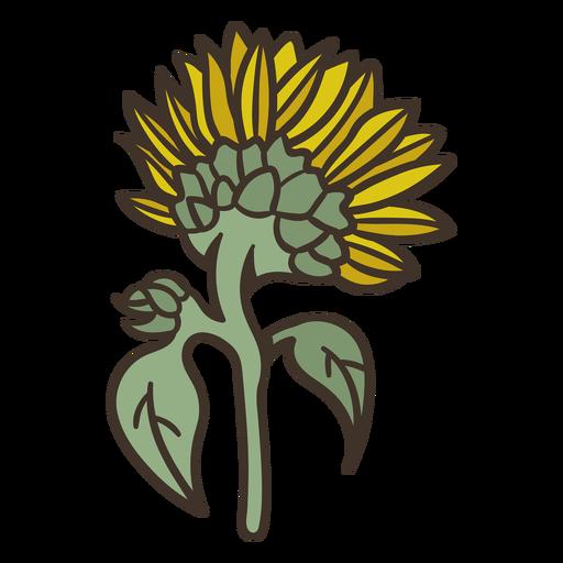 Semi flat sunflower facing backwards
