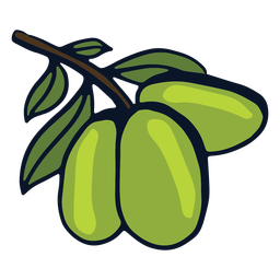 Lime fruit branch
