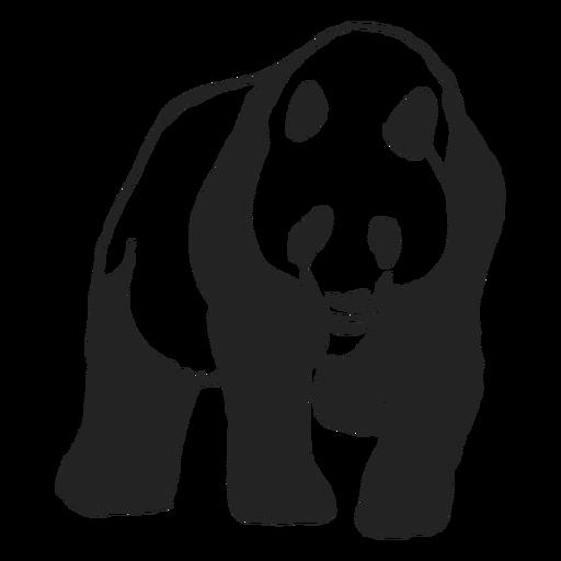 Panda bear walking