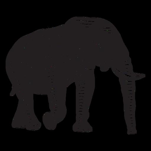 Elephant wild animal cut out