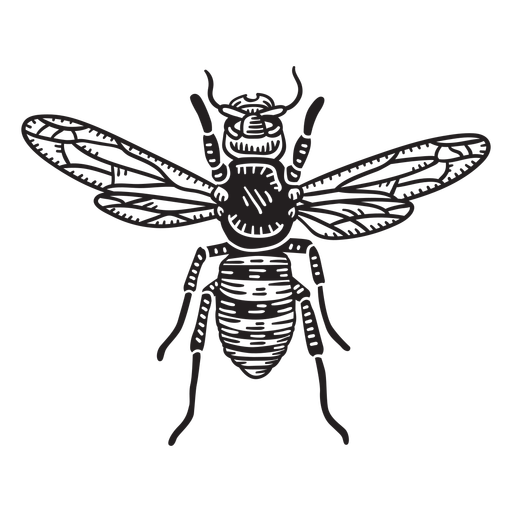 Hand drawn cut out honey bee