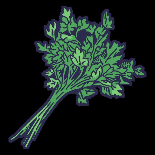 Color stroke bundle of parsley
