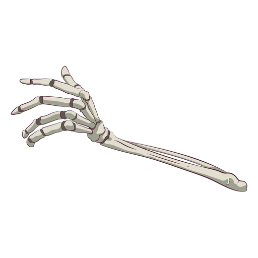 Hand bones illustration