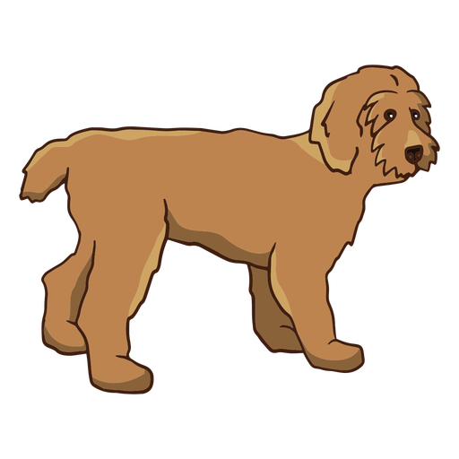 Small poodle standing color stroke