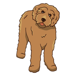 Small poodle frontal color stroke
