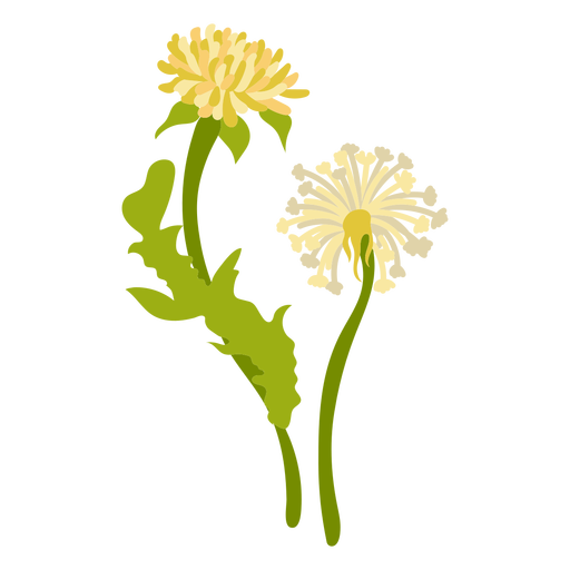 Sierra lessingia flower flat